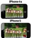 iPhone5 010